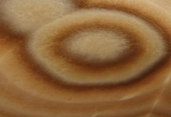 Onice Etrusco